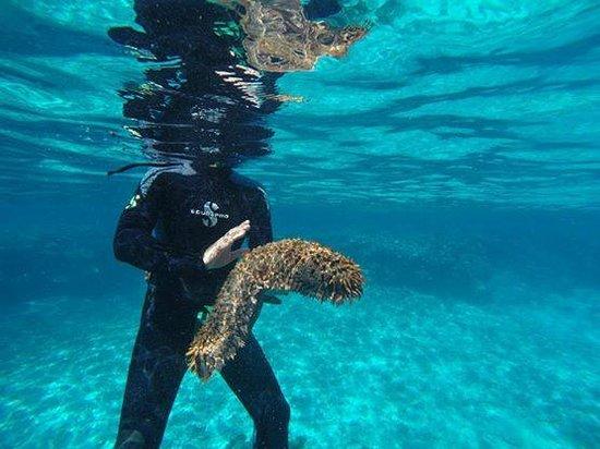 Aquanature: :)