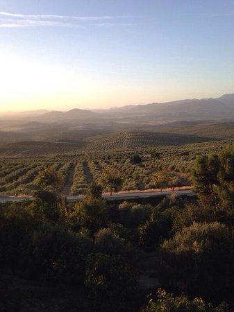 Hotel el Postigo: Views of olive farms from walled town of ubeda