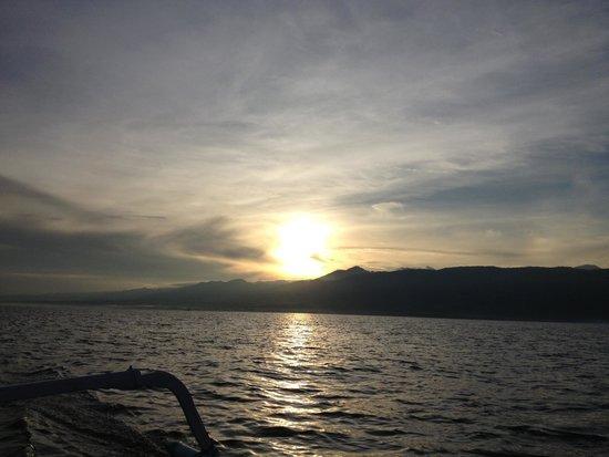 Dolphin Beach Bali : Dolphin Watching