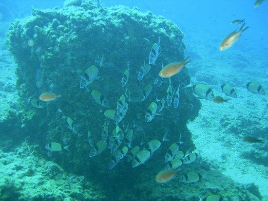 Centro de buceo Nisos Benidorm: Inmersión Isla de Benidorm