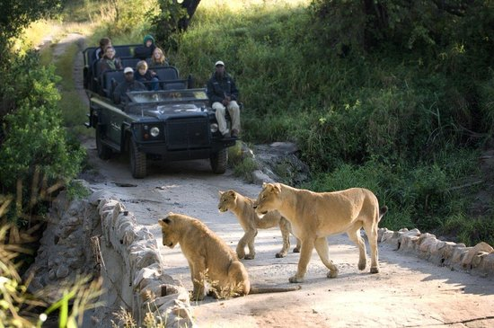 Lion Sands River Lodge: Safari