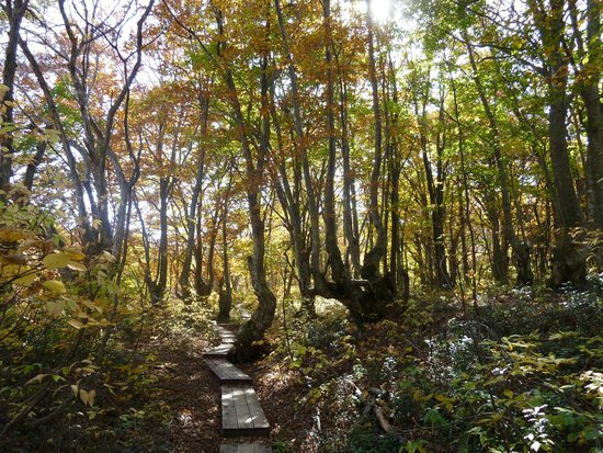 Nakajimadai Shishigahana Marsh