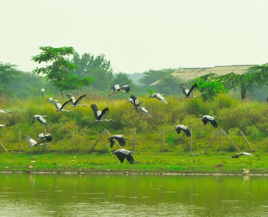 Damdama Lake : less birds