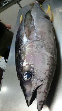 O' Cha Cha Modern Japanese Dining: Local caught yellow fin tuna.