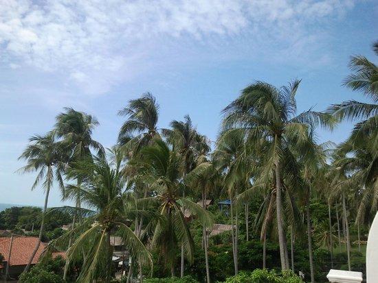 Lamai Buri Resort: Пальмы