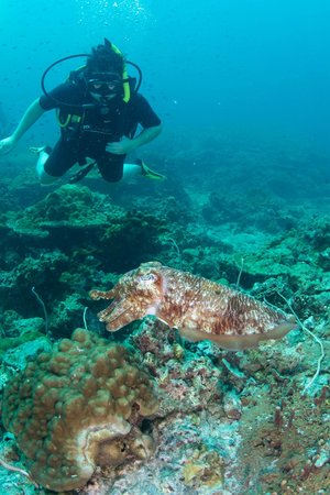 Go Dive Lanta: with cuttle fish