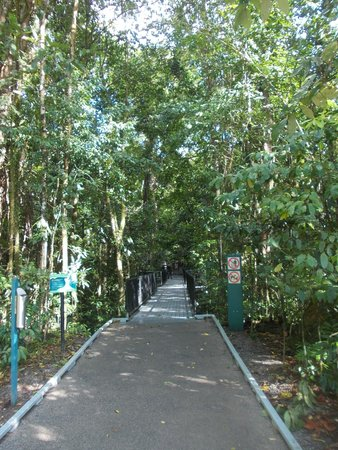 touristic pathway in the mossman gorge picture of. Black Bedroom Furniture Sets. Home Design Ideas