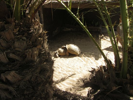 Cocodrilo Park zoo : Tarta sex
