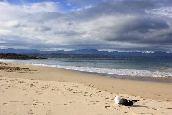 Plett Beachfront Accommodation: Playa enfrente del hotel