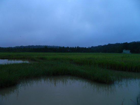 Wayanad Nature Resorts: Paddy field nearby