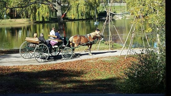 Serenity Springs: Complimentary Carriage Rides