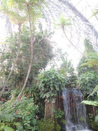 Yume no Shima Tropical Greenhouse Dome: 室内