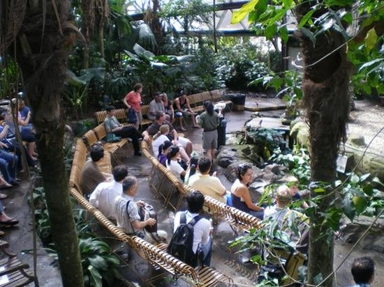 Cairns ZOOM and Wildlife Dome: ステージのショータイム