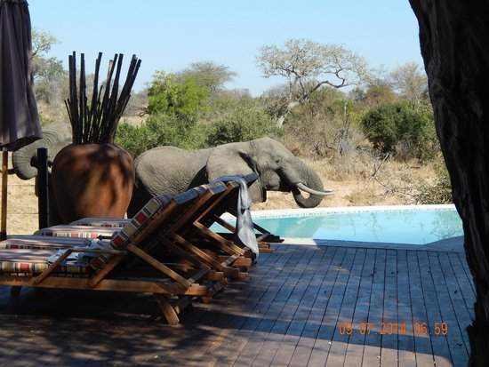 Kambaku River Sands: An elephant visiting the pool