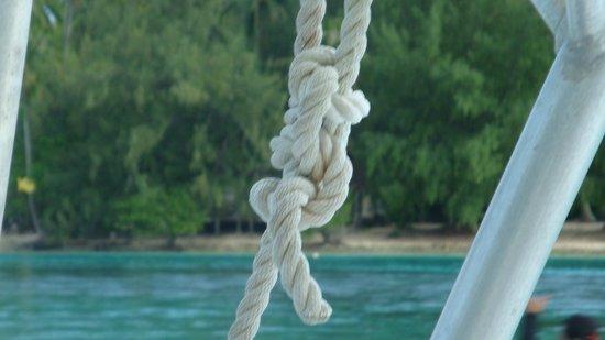 Moorea Deep Blue: Reef Knot?