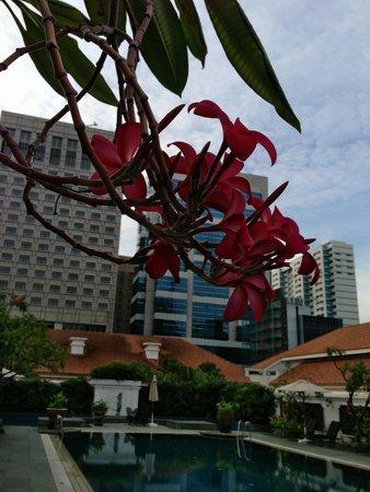 Swimming pool foto di raffles hotel singapore singapore tripadvisor for Raffles hotel singapore swimming pool
