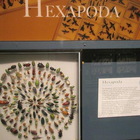 Harvard Museum of Natural History : Beautifully displayed