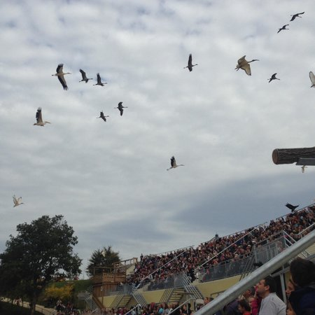 Cussay, Frankrijk: The bird display at Beauval is amazing