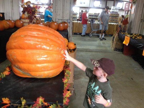 Froberg's Farm: The Great Pumpkin