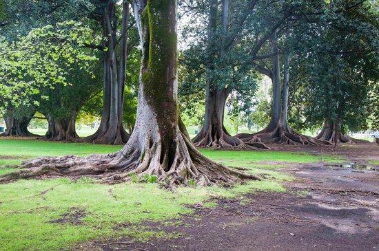 Botanic Park: Mature trees
