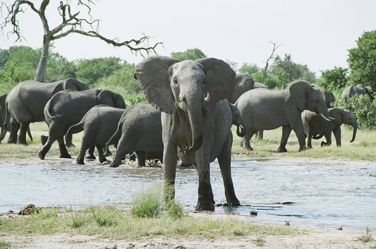 Savute Safari Lodge : What are you staring at?