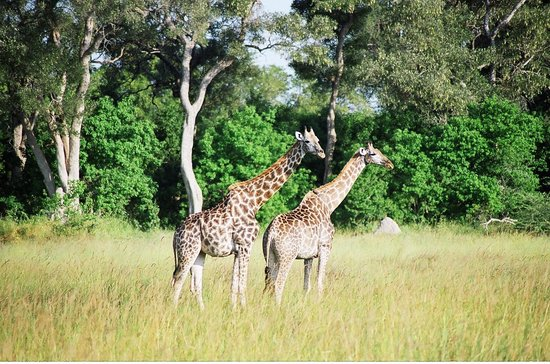 Savute Safari Lodge : Simply majestic
