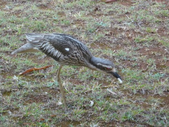 Seminara Apartments : Curlew
