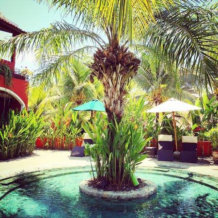 PinkCoco Bali : pool