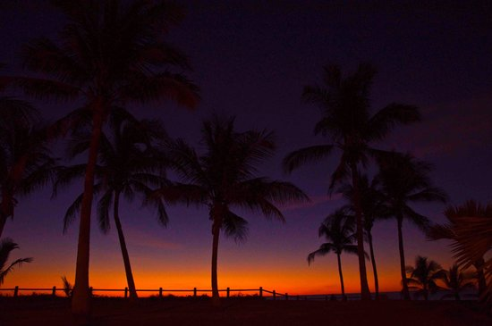 Cable Beach: Sunset plams at the beach