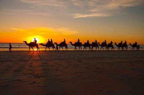 Cable Beach: Camel train