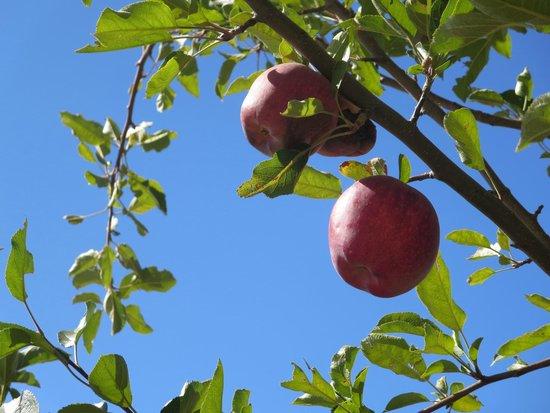 Riley's Apple Farm: red delicious