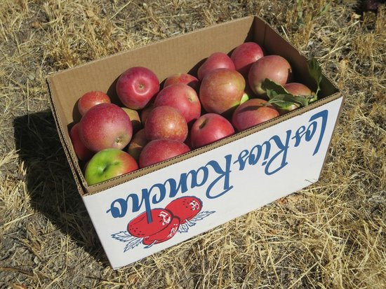Riley's Apple Farm: box is the best deal