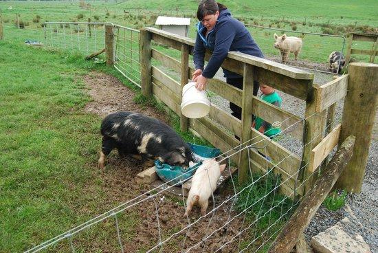 Waitomo Farmstay : Feeding time on the farm tour.