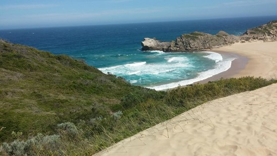 Robberg Nature Reserve: Where the green ends and the dune starts