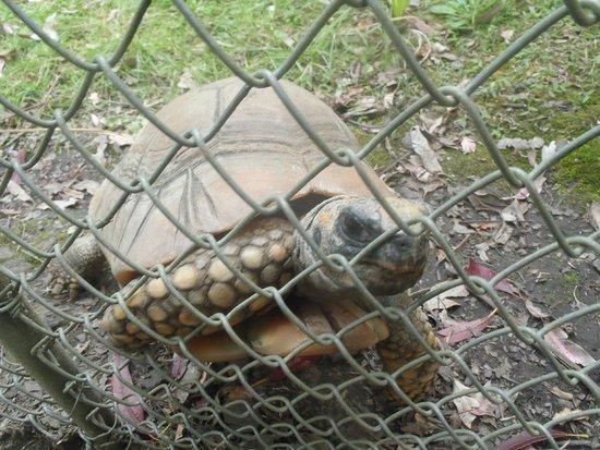 Reptile Park : A friendly tortoise