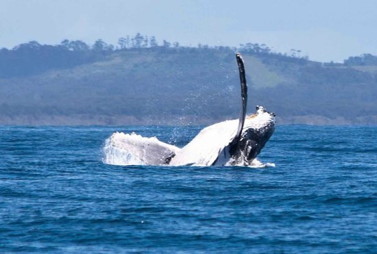 Coffs Harbour, Australia: Humpback Whale