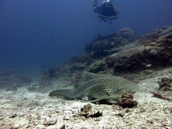 No Gravity Dive Center: phuket