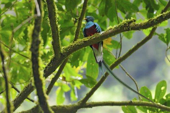 Sendero Los Quetzales (The Quetzales Trail): Le Quetzal