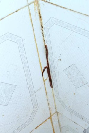 Dalhousie Palace Hotel: Small snake with bothside faces on the bathroom wall...