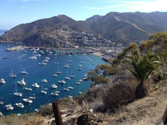 Catalina Adventure Tours: beautiful