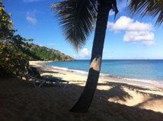Galley Bay Resort: Our beautiful view when we stepped out our door