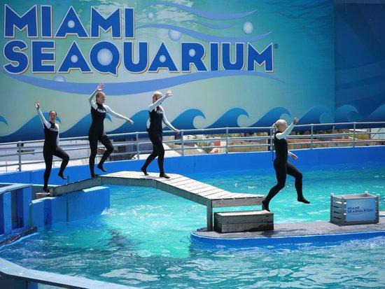 ... golfinhos! - Picture of Miami Seaquarium, Key Biscayne - TripAdvisor