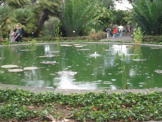 Jardín Botánico - Picture of Botanical Gardens (Jardin Botanico), Puerto de l...