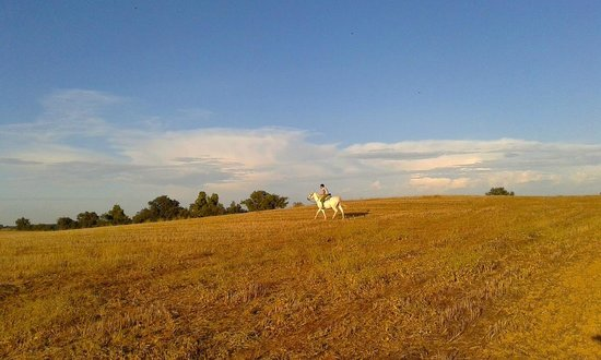 Cal Perello: horse riding in the fields