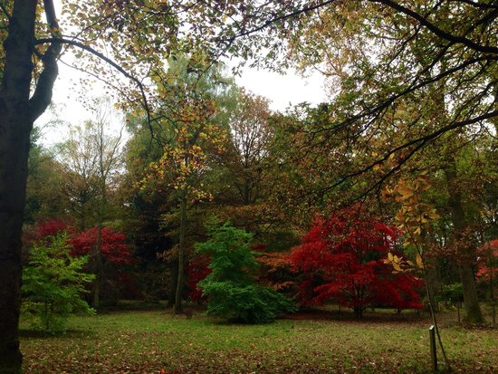 Queenswood Country Park: Autumn leaves