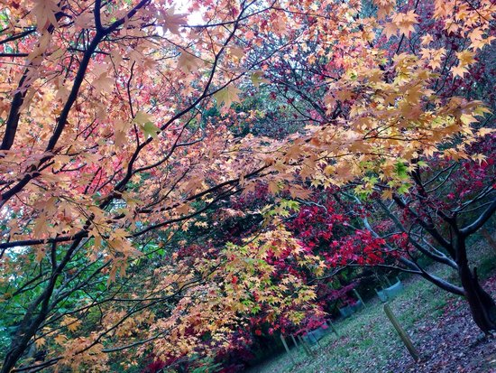 Queenswood Country Park: Lovely colours