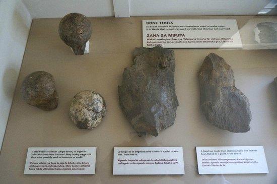 Olduvai Gorge Museum: Fossils