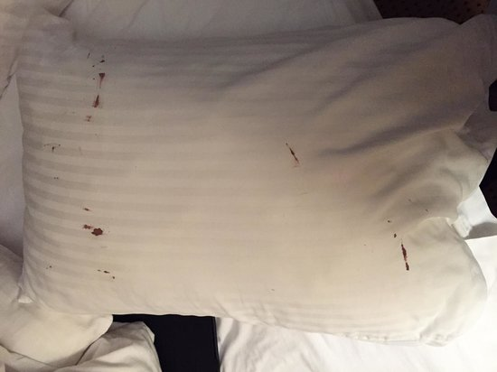 Lafayette, IN: just 1 of the 3 BLOODY Pillows
