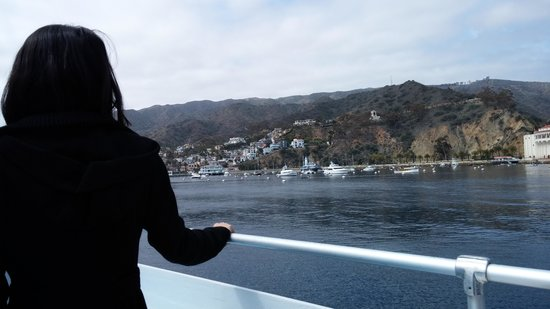 Bluewater Avalon Seafood Restaurant : Hello Catalina!