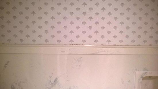 BEST WESTERN Grand Manor Inn: Mold above shower
